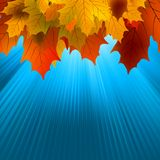 Autumnal leafs of maple and sunlight. EPS 8 Stock Images