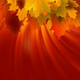 Autumnal Leafs Of Maple And Sunlight. EPS 8 Royalty Free Stock Photography
