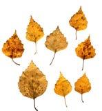 Autumnal Leafs Set Stock Photo