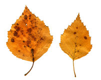 Autumnal Leafs Set Stock Photography