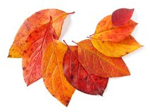 Autumnal leaves Royalty Free Stock Images