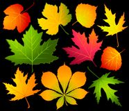 Autumnal leaves. Royalty Free Stock Photo