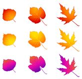 Autumnal leaves. Royalty Free Stock Image