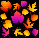 Autumnal leaves. Stock Images