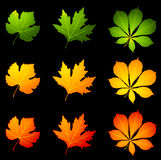 Autumnal leaves. Stock Image