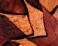 Autumnal leaves. Texture Royalty Free Stock Photography