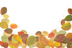 The autumnal leaves against white background Stock Image