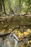 Autumnal leaves at Andarax river Stock Photos