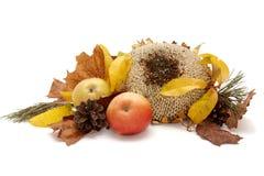 Autumnal leaves arragement Stock Photo