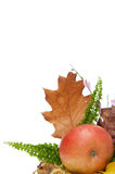 Autumnal leaves arragement Stock Photography