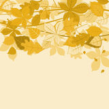 Autumnal leaves background. Autumnal leaves on colorful background for seasonal design Royalty Free Stock Photos