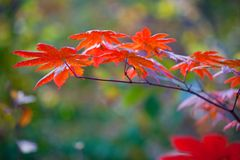 Autumnal leaves background Royalty Free Stock Photography