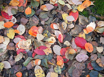 Autumnal leaves background texture Stock Photos