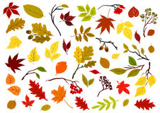 Autumnal leaves, berries and herbs Royalty Free Stock Images