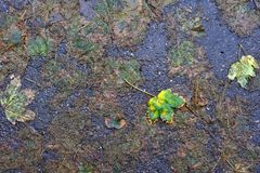 Autumnal Leaves and Bitumen Stock Photos