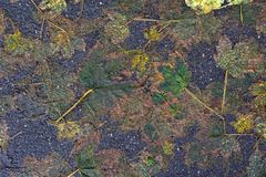 Autumnal Leaves and Bitumen Stock Photography