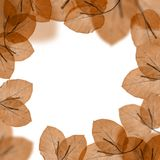 Autumnal leaves border Royalty Free Stock Photography