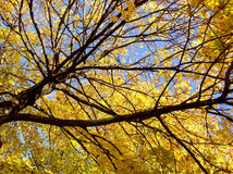 Autumnal leaves and branches Stock Photos