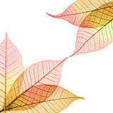 Autumnal leaves composition Royalty Free Stock Image