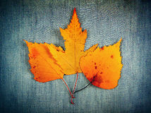Autumnal Leaves on Denim Royalty Free Stock Photos
