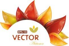 Autumnal leaves design Stock Photo