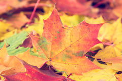 Autumnal leaves on the forest floor. Stock Image