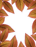 Autumnal leaves frame Stock Photos