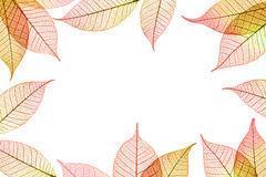 Autumnal leaves frame composition Stock Photography