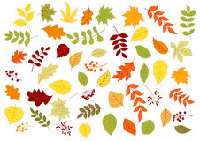 Autumnal leaves, herbs, seeds and berries Royalty Free Stock Photos