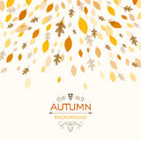 Autumnal Leaves. Illustration of a Fall Background Design with Autumnal Leaves Royalty Free Stock Photos