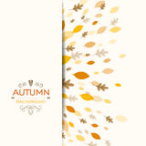 Autumnal Leaves. Illustration of a Fall Background Design with Autumnal Leaves Royalty Free Stock Photo