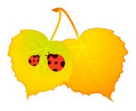 autumnal leaves and ladybirds Royalty Free Stock Photos