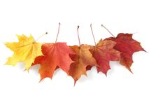 Autumnal leaves palette Stock Photos
