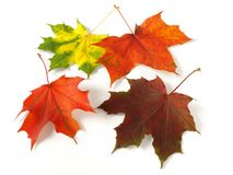 Autumnal leaves palette Royalty Free Stock Images