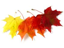 Autumnal leaves palette Royalty Free Stock Photography