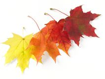 Autumnal leaves palette Stock Image