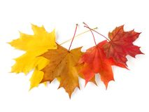 Autumnal leaves palette Stock Photo