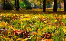 Autumnal leaves in the park stock photos