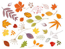 Autumnal leaves and plants. Set for seasonal design Royalty Free Stock Image