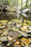 Autumnal leaves in the river Royalty Free Stock Photos
