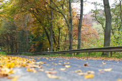 Autumnal leaves on rural road Stock Image