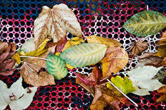 Autumnal leaves still life Stock Images