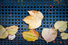 Autumnal leaves still life Royalty Free Stock Photography