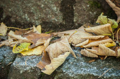 Autumnal leaves in the stoned stairs. Retail of autumnal leaves in the stoned stairs Royalty Free Stock Photography