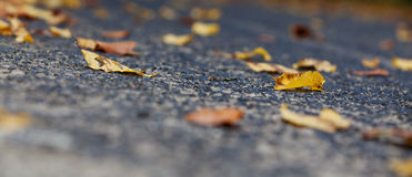 Autumnal leaves on street Stock Photos