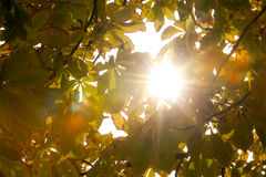 Autumnal leaves and sunlight Stock Photos