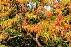 Autumnal Leaves Stock Images