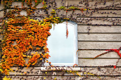 Autumnal leaves on the wall Royalty Free Stock Images