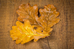Autumnal leaves on wood background Royalty Free Stock Photo