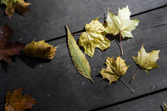 Autumnal Leaves on Wooden Planks Royalty Free Stock Photos